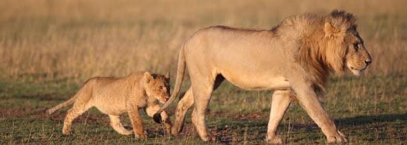 wanneer kan je het best op safari gaan? citytrip en reisinfoals je van plan bent op safari te vertrekken naar afrika, zoek je best op voorhand uit in welke periode je best vertrekt de meeste landen hebben een