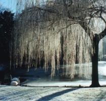 Weer en klimaat in Brugge