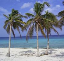 Weer en klimaat in Havana