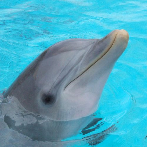 Dolfijn in Havana