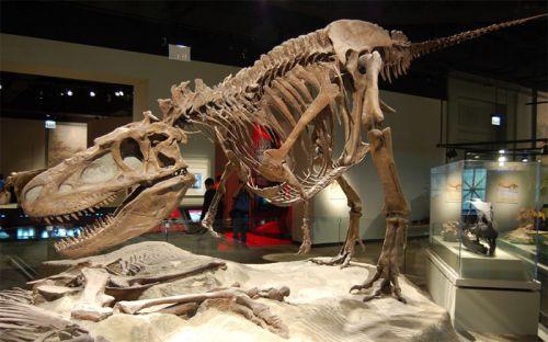 Dinosaurusskelet