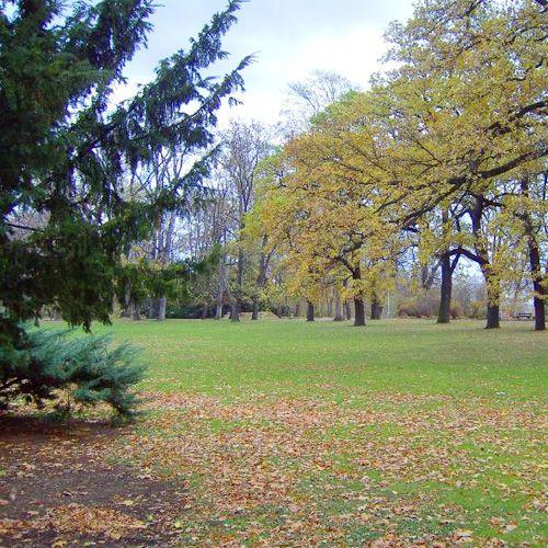 Grasveld in het Letnápark