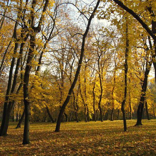 Bomen in Stromovka
