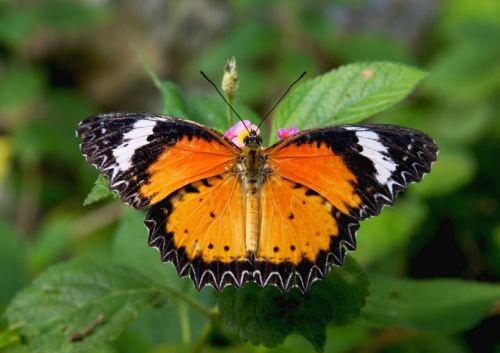 Vlinder in het Palmenhaus