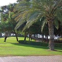 Palmboom in het Al Safa Park