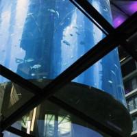 Groot aquarium