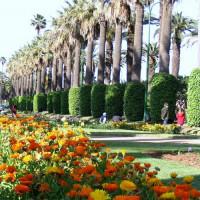 Palmbomen in het Park van de Arabische Liga