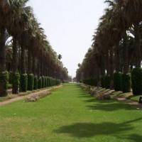 Bomenrijen in het Park van de Arabische Liga