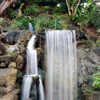 Waterval in het Arboretum van Los Angeles