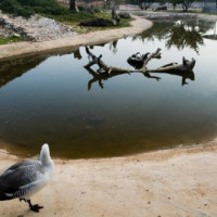 Vijver voor watervogels