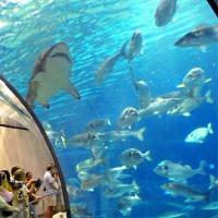 Haaien en vissen in L'aquarium