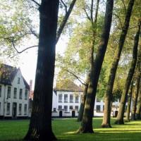 Bomen in het Prinselijk Begijnhof