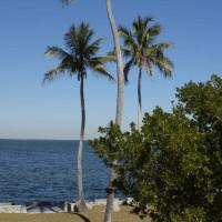 Palmbomen in het Biscayne National Park