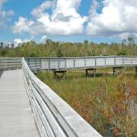 Wandelpad in de Everglades