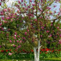 De Botanische Tuin van Kiev in bloei