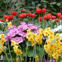 Bloemen in de Botanic Gardens