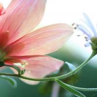 Bloemen in Powsin
