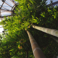 Binnen in de Botanische Tuin