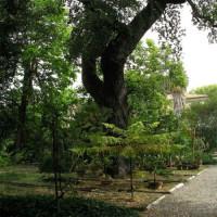 Planten in de Orto Botanico di Pisa