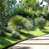 Struiken in de Orto Botanico