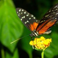 Vlinder in Butterfly World