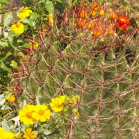 Cactus in de Antwerpse Plantentuin