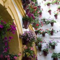 Bloemen in Cordoba