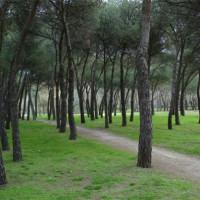 Bomen op het Casa de Campo