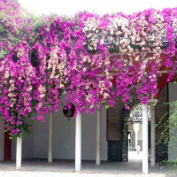 Bloemen aan het Huis van Pilato