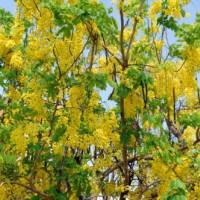 Flora in het Chatuchak Park