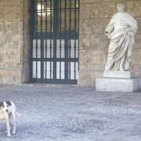 Hond bij het Palacio de los Capitanes Generales
