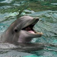 Dolfijn in het Boudewijn Seapark