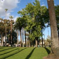 Bomen in Echo Park