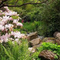 Planten in de Royal Botanic Garden