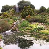 Vijver in de Royal Botanic Garden