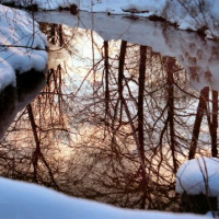Winterbeeld in de Englischer Garten