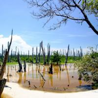 Moerassen van de Everglades National Park
