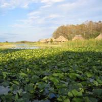 Hutjes in de Everglades