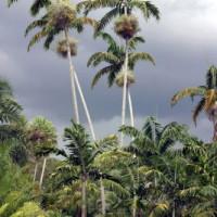 Palmbomen in Fairchild Garden