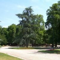 Bomen in de Giardini Pubblici