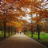 Bomen in Greenwich Park