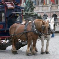 Paardenkoets op de Grote Markt