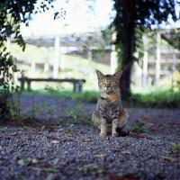 Kat in de Hama Rikyu tuin
