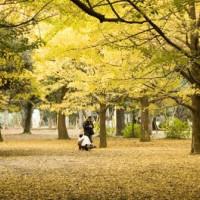 Bomen in Harajuku