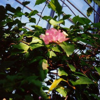 Bloem in Gardenia