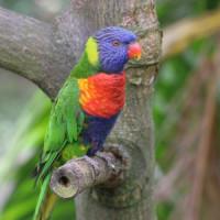 Papegaai in Hong Kong Park