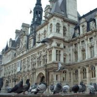 Duiven aan het Hôtel de Ville