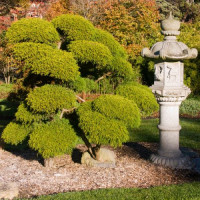Sculptuur in de Japanse Theetuin