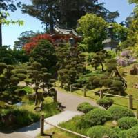 Bomen in de Japanse Theetuin