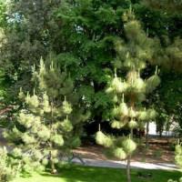 Bomen in de Jardin Botánico de Córdoba